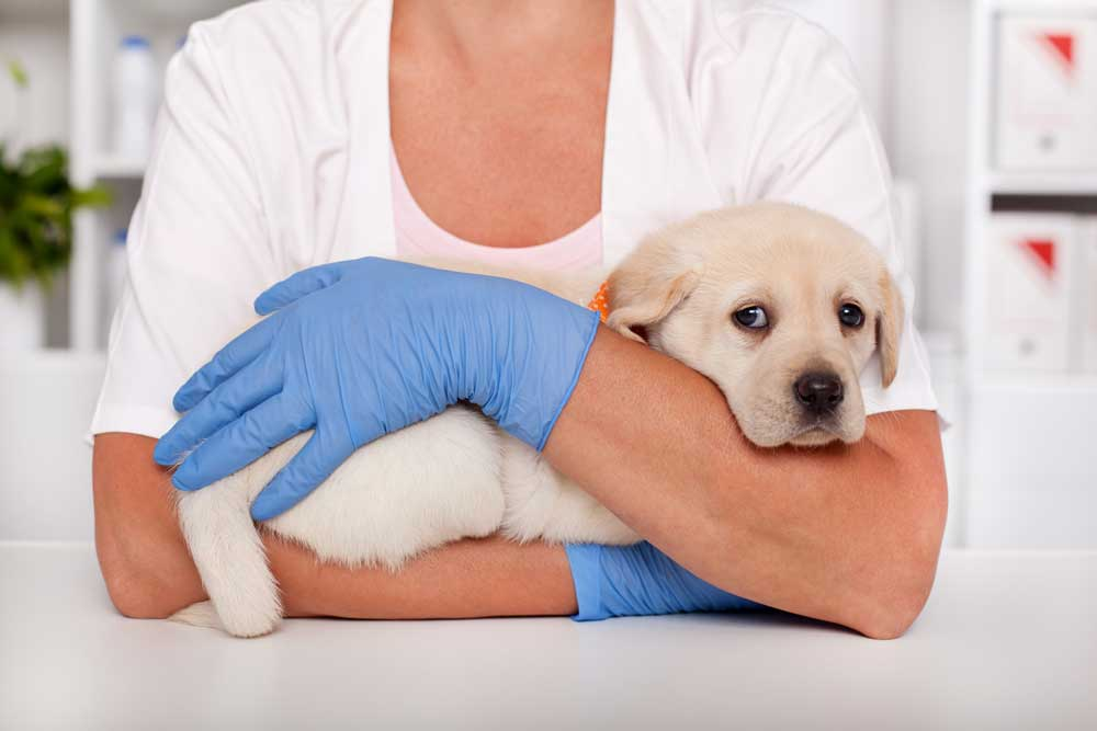Online pojištění zvířete